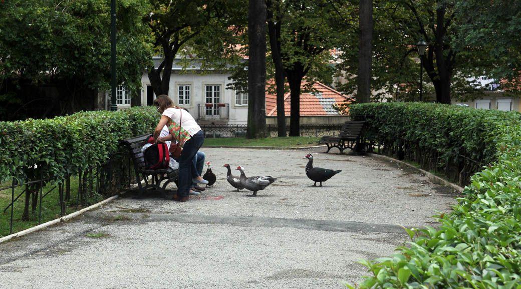 Утки индюки в парке Лиссабон, Португалия