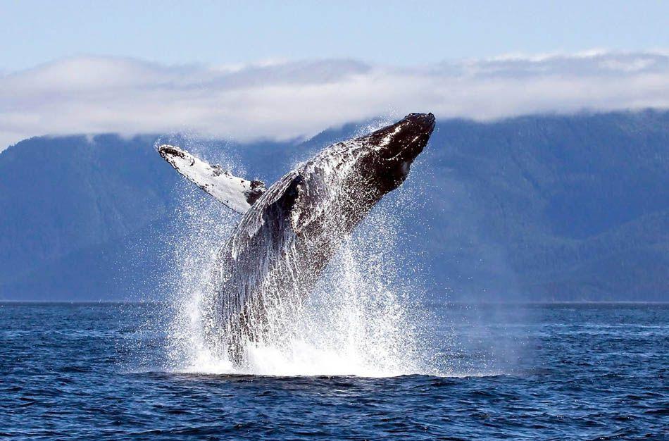 Наблюдение за китами на Тенерифе
