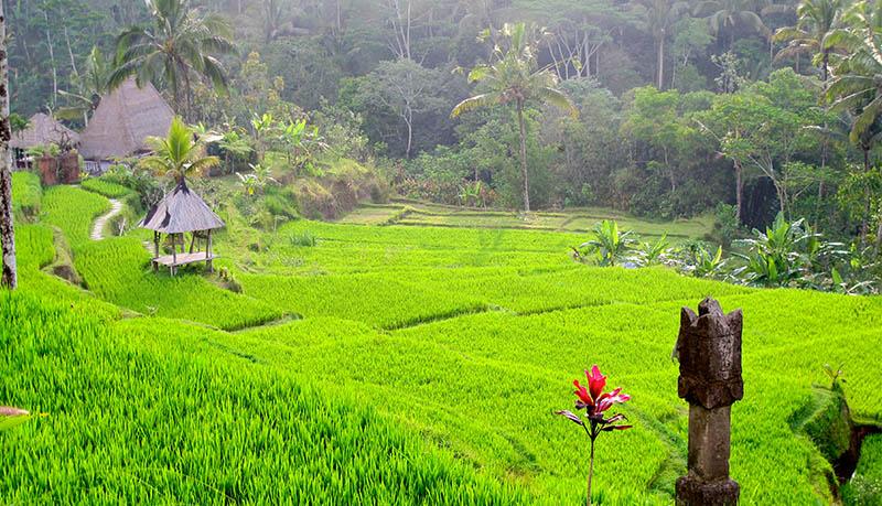 Бали террасы