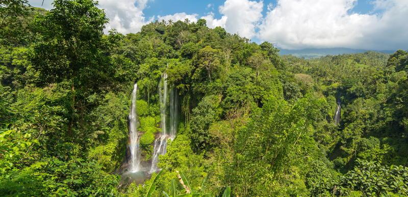 водопад и лес на бали