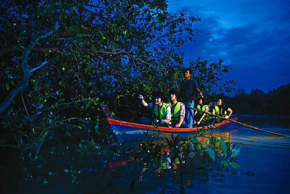 Парк светлячков куала лумпур (Kuala Selangor Fireflies)