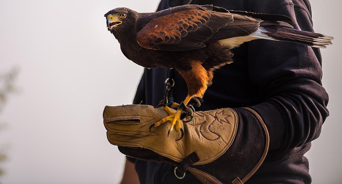 Falcon Souk